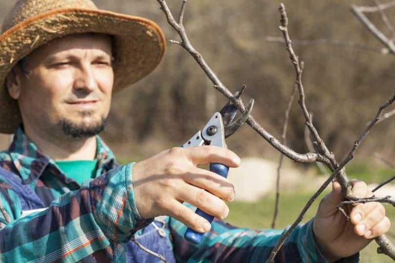 Gartenschere Ast schneiden